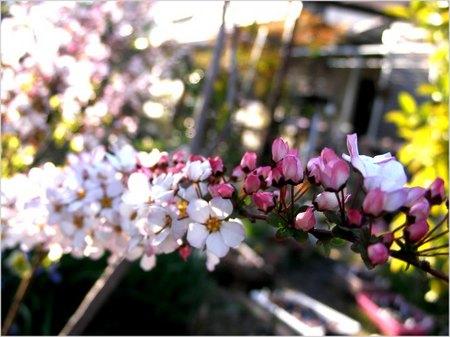 2014_0414yukiyanagi.jpg